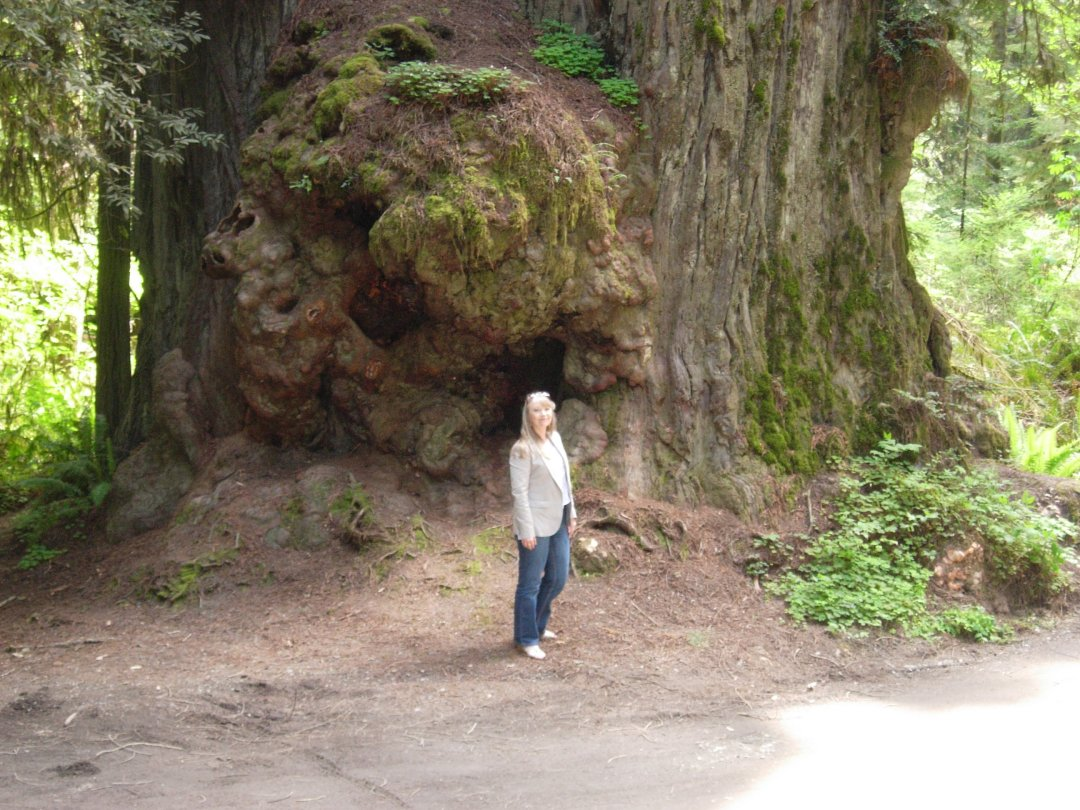 Hazel Raven In Giant Redwood Forest